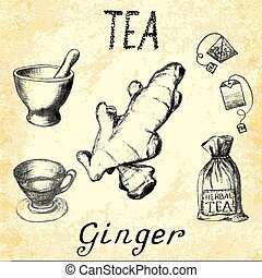 Ginger herbal tea. Set of elements on the basis hand pencil...