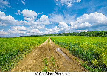Road by the field - Dirty road by the field with flowers at...