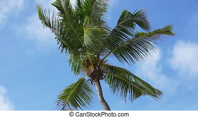 Tropical green palm tree with blue sky