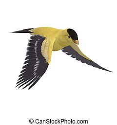 Male Goldfinch. 3D rendering with clipping path and shadow...
