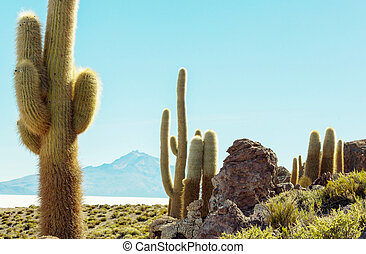 Cactus in Bolivia - Cactuses on the Bolivian Altiplano