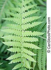 Fresh green fern leaves in the forest background - Fresh...