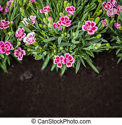 Flowers in grass growing from natural clean soil. Copy-space...