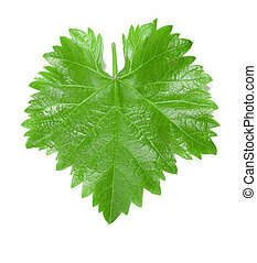 Grape leaf - Colorful grapes leaf isolated on white...