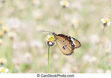Monarch Butterfly on a flower - Monarch Butterfly perched on...