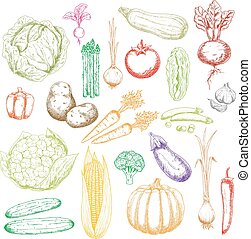 Sketch icons of freshly harvested vegetables