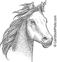 Lively little horse of arabian breed, sketch style - Lively...