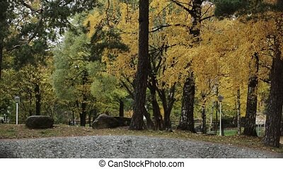 Trees in autumn park. Yellow, green, gold leaf. Scenery....