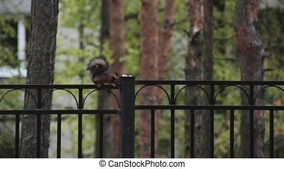 Little squirrel sitting on black fence in green park Nature...