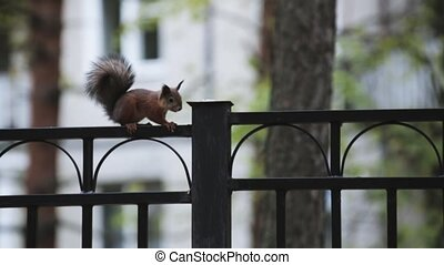 Little squirrel run on black fence in green park. Nature....