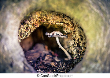 Fungus in a tree cavity