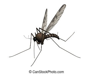 Mosquito - 3D Illustration of a mosquito
