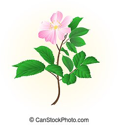Twig wild rose vectoreps - Twig wild rose leaves and flowers...