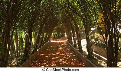 Closeup Motion Through Decorative Tree Tunnel Specially...