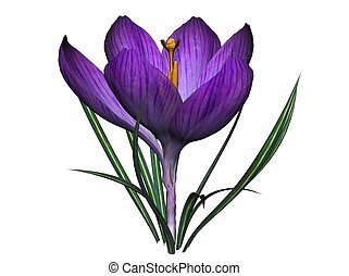 Crocus, rendered with Bryce 6