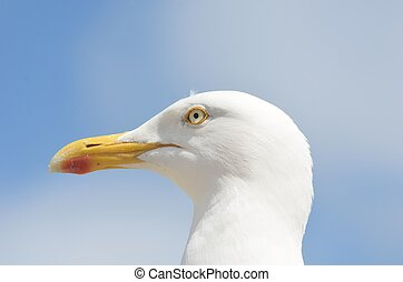 Seagull head with sky in background