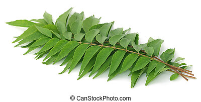 Curry Leaves - Curry leaves over white background