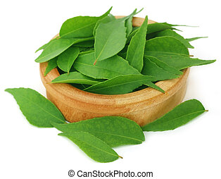 Curry Leaves - Curry leaves in a wooden bowl over white...