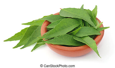 Curry Leaves in a clay  pottery over white background
