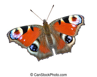 European Peacock butterfly (Inachis io) isolated on white