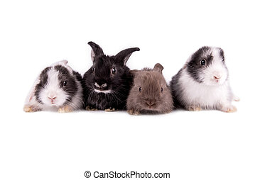 Four of the rabbit isolated on white background. - Pets....