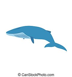 big blue whale isolated on white background