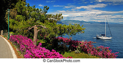 pine tree by the roadside on the Mediterranean Sea