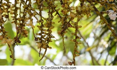 Flower seed and pollen with bee - Beautiful flower seed and...
