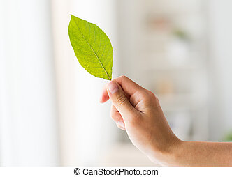close up of woman hand holding green leaf