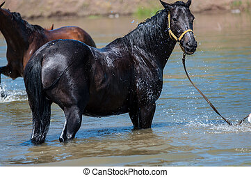 Horses at a watering-place on a hot summer day