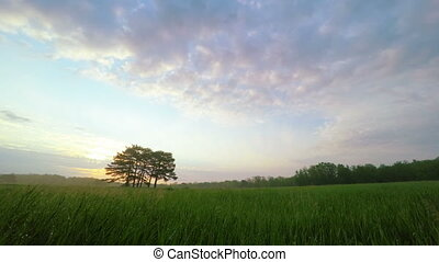 Sunrise in Green Meadow with Pines in the Middle in...