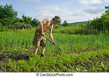 Man with Hoe 13 - A man weeds garden-bed with hoe. Summer,...
