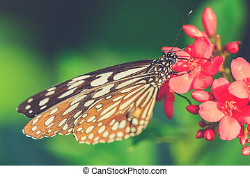 beautiful butterfly sitting in the flower Vintage filter...