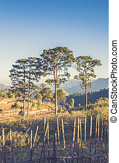 view point , doi angkhang , chiangmai , thailand Vintage...