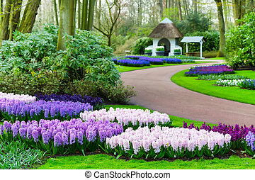 Colorful hyacinth flowers blossom in spring garden -...