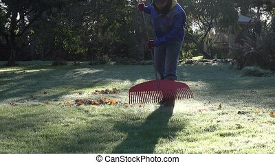 Gardener in warm clothes rake leaves on frosted garden grass...