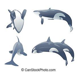 set of killer whales jumping on white. vector illustration