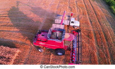 Combine Harvester Gathers the Wheat - Aerial View Combine...