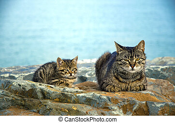 Mother on the sea rocks family of Cats and Kittens