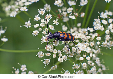 Bugs feed on pollen on flowers - Bugs feed on pollen on...