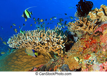 Komodo Coral Reef - The Pristine and Colorful Coral Reefs of...