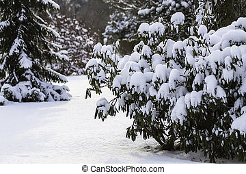 Trees with snow in winter time