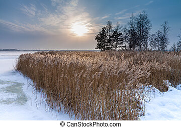 Winter on a lake with reeds