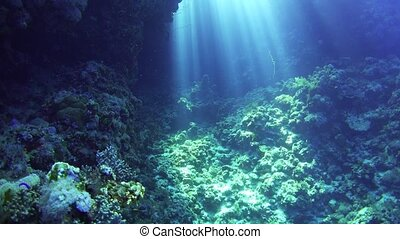Sunlight Illuminates a Underwater Cave, Red Sea