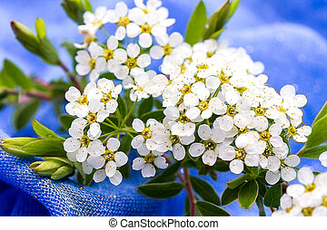Small white flowers blurred on blue background