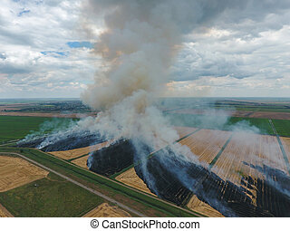 Burning straw in the fields of wheat after harvesting -...