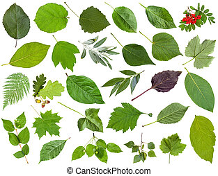 collection of green leaves isolated on white - set of...