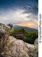 Peeking Through Rocks at Sunset over rhododendron bushes