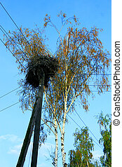 Nest of storks on the telegraph-pole in village