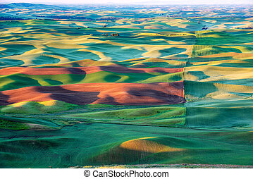 Light and shadows on the rolling hills of the Palouse